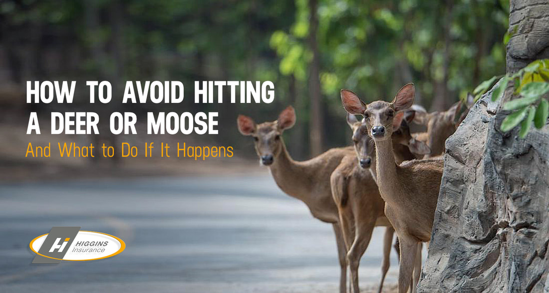 How to Avoid Hitting a Deer or Moose and What to Do If It Happens